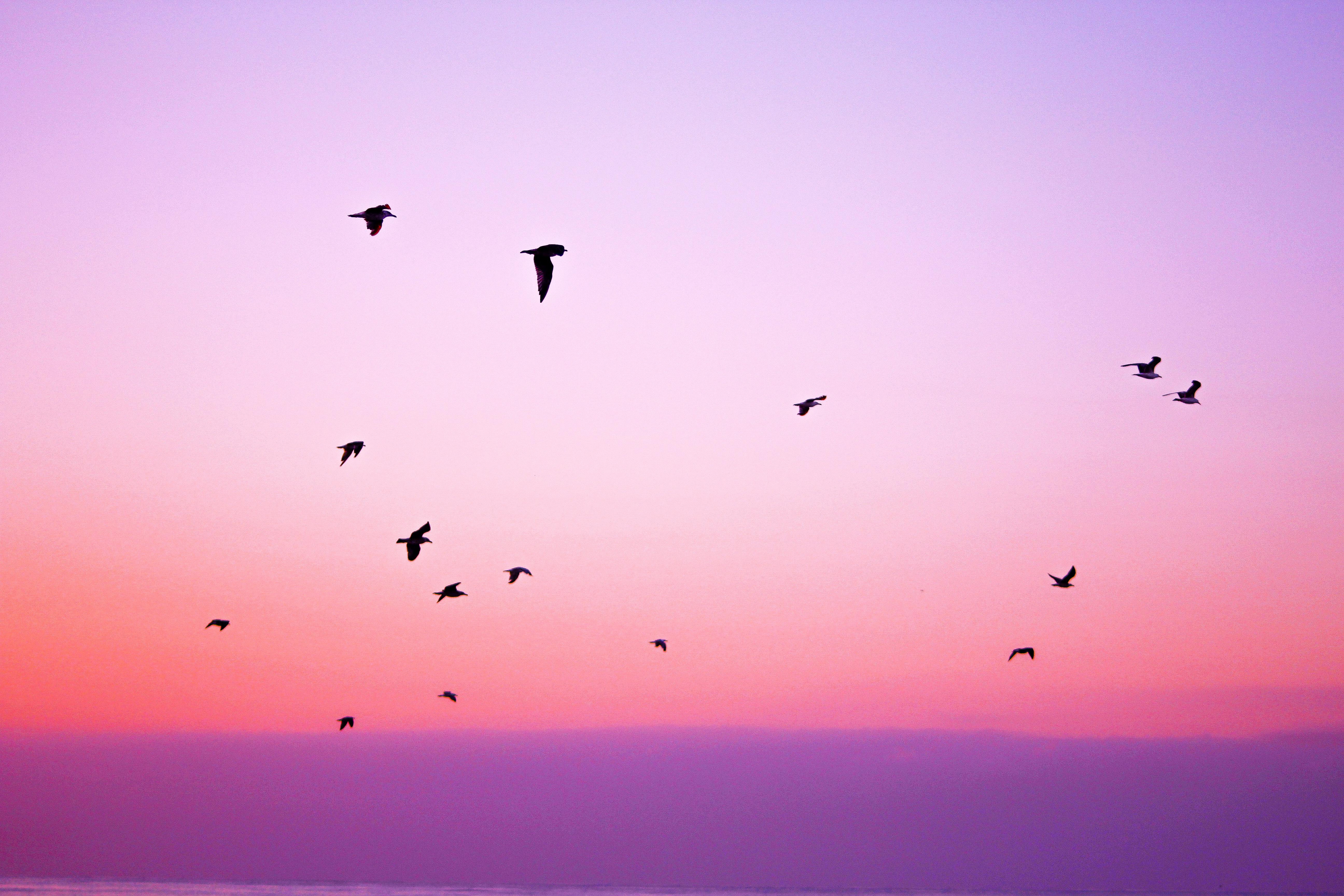 Which type of bird are you - lark, owl, hummingbird